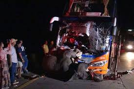 Elephant Killed in Bus Crash in Thailand; Driver Injured